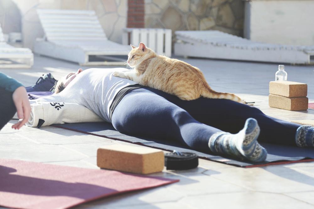 cat_yoga_belly_full