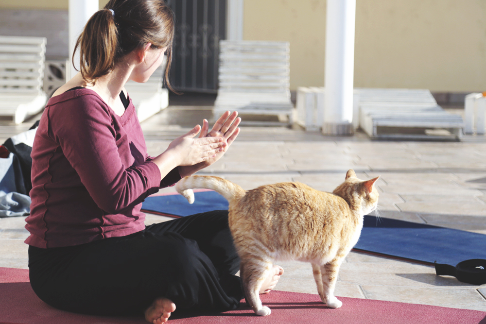 cat_yoga_belly_hand