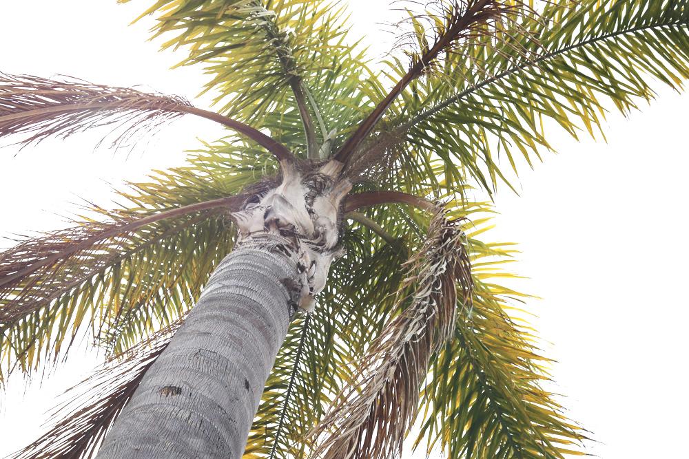 palme_palmtree_spain_malaga